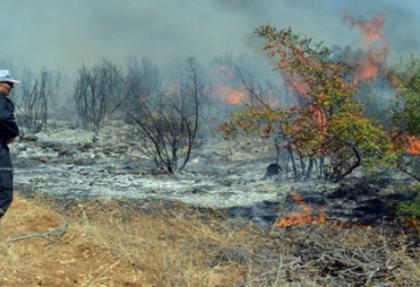 Orman yangını arttı, yanan alan azaldı