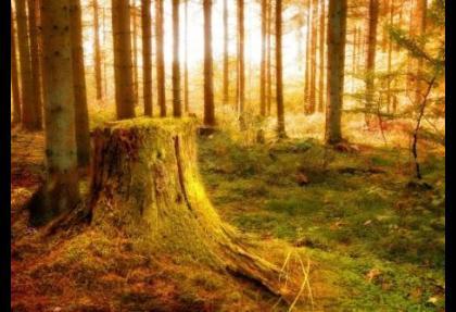160 bin ağaca fatura kesiliyor