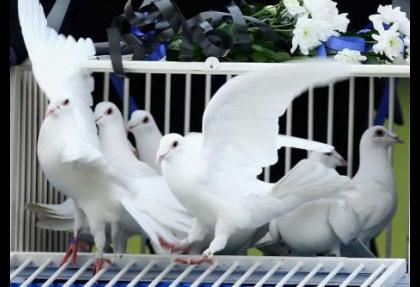 Şahin mi güvercin mi?