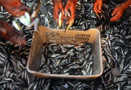 Su ürünleri av yasağı kalkıyor