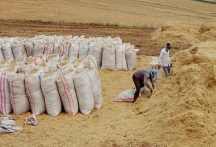 Yem ve saman fiyatları üreticiyi üzmeyecek