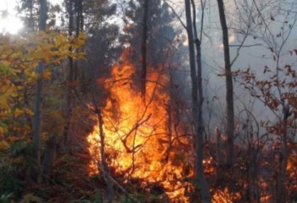 Adrasan'da orman yangını çıktı