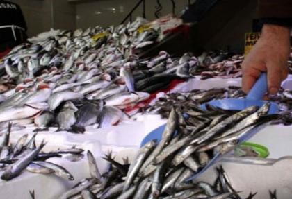 Kurban Bayramı nedeniyle balık fiyatları düştü