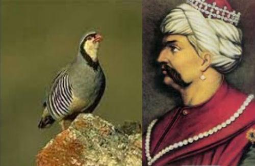 Padişah Selim, kekliğin kafasını neden koparttı?